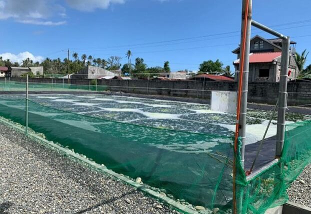 Fish pond liners